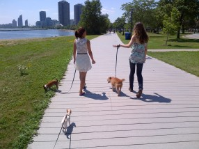 Sisters and puppies on the boardwalk by Lake Ontario