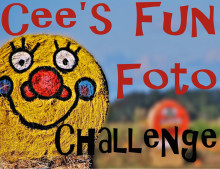Cee's Fun Foto Challenge: rocks, sand, dirt, paths, walks,trails