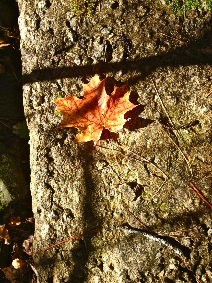 A lonely leaf by the Notawasaga River