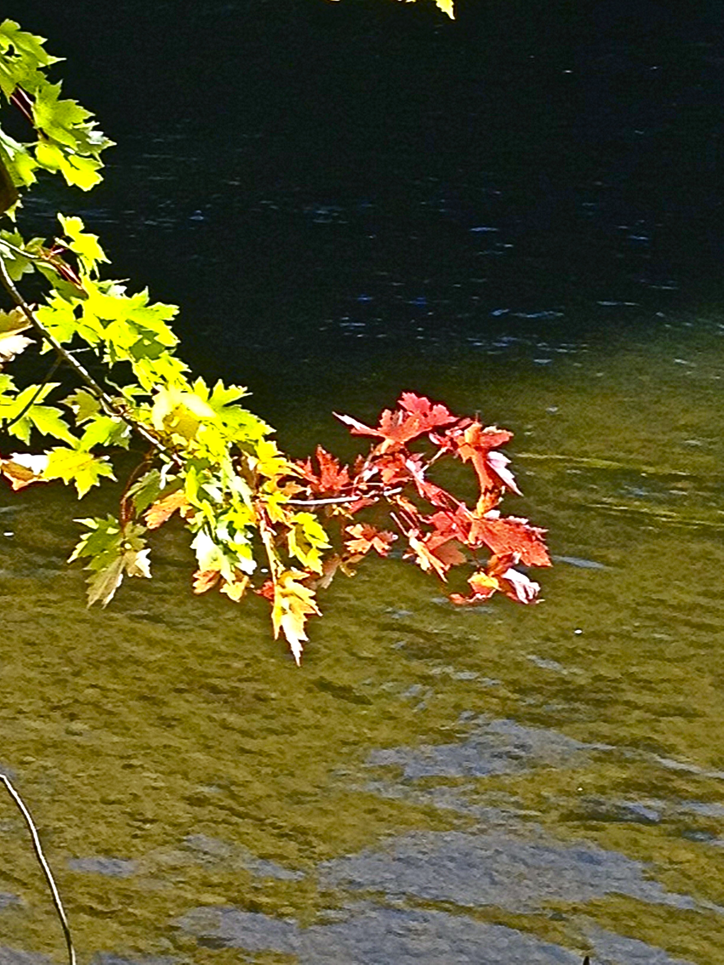 Cees Fun Foto Challenge: Leaves andTrees